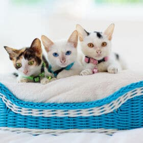 3 kittens in a blue and white basket