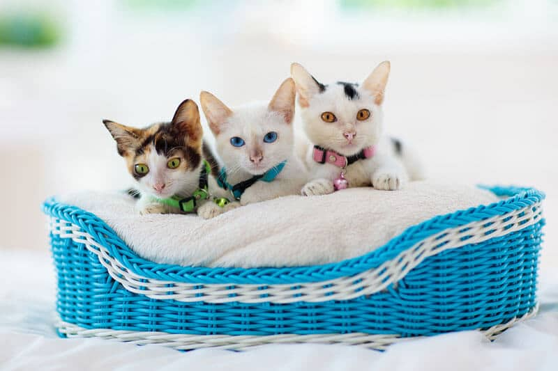 Best Cat Products: Complete Guide to Stylish At Home Supplies I The Discerning Cat