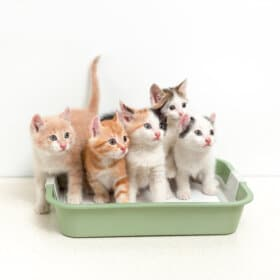 Kittens sitting in kitty litter tray