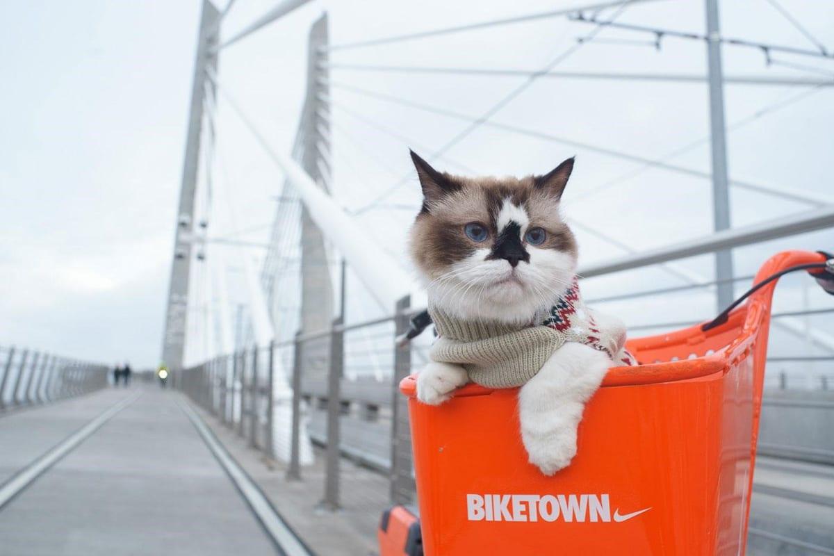 cat in orange bike basket