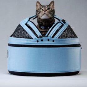 Cat looks out of blue cat carrier