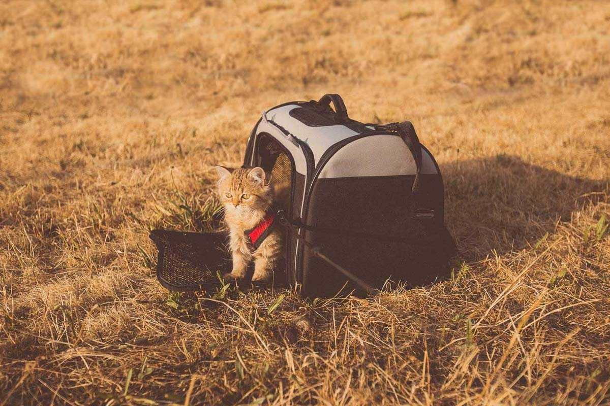Cat Hacks - Getting your Cat Out and About - Leashes, Harnesses, Carriers etc
