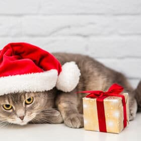 grey cat with santa hat and present