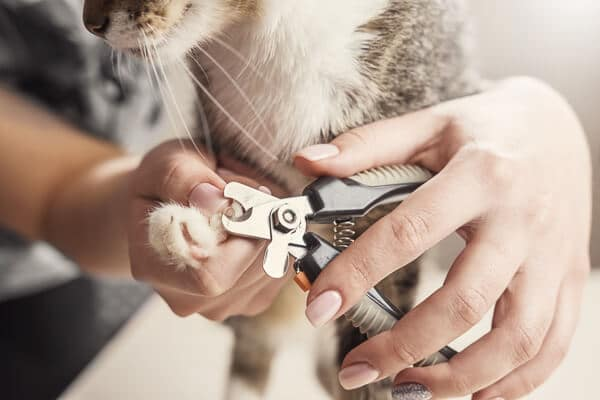 cats nails being clipped