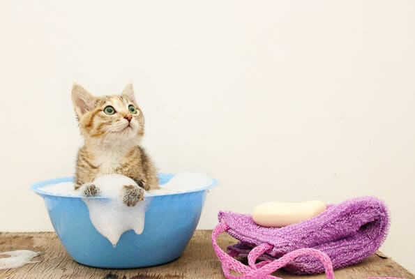 kitten in blue bowl with soap suds