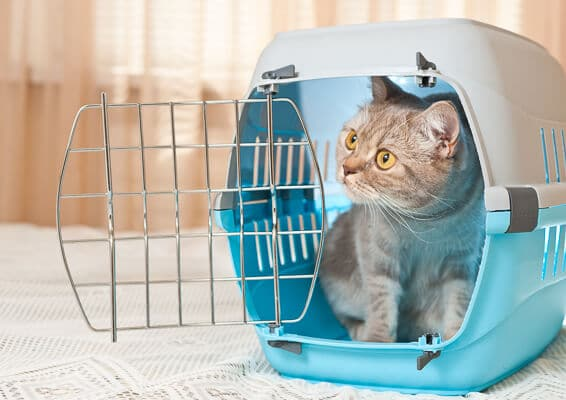 grey cat in blue carrier