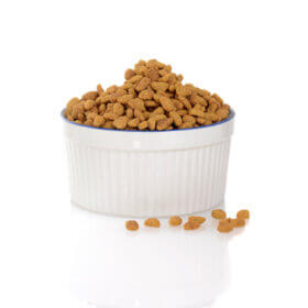 white bowl with dry cat food