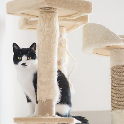 black and white cat and white scratching post key to caring for cats