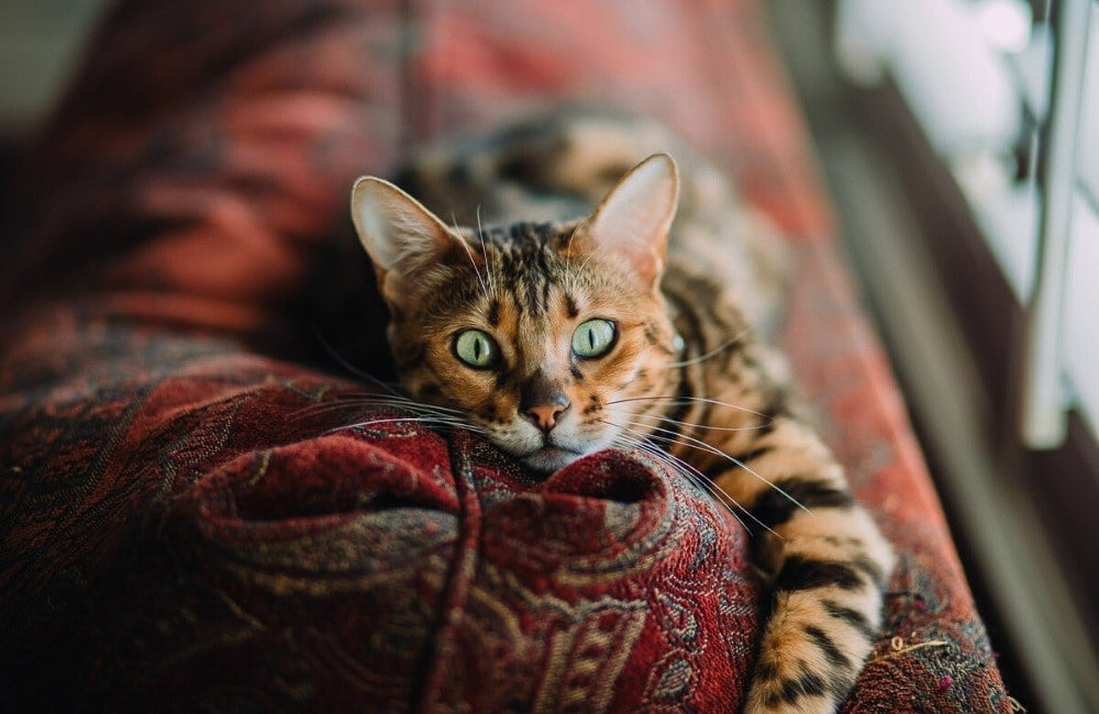 tabby cat with green eyes on colourful blanket