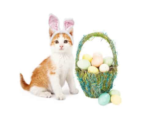 An adorable little kitten wearing Easter Bunny ears sitting next to a pretty straw basket filled with colorful eggs