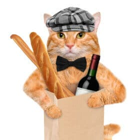Cat with all things french