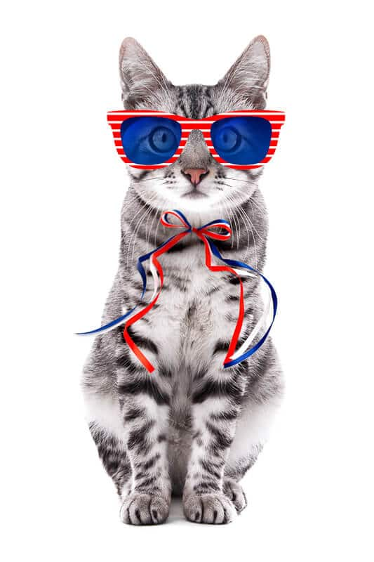 Cute cat with sunglasses and bow on white background. USA holida
