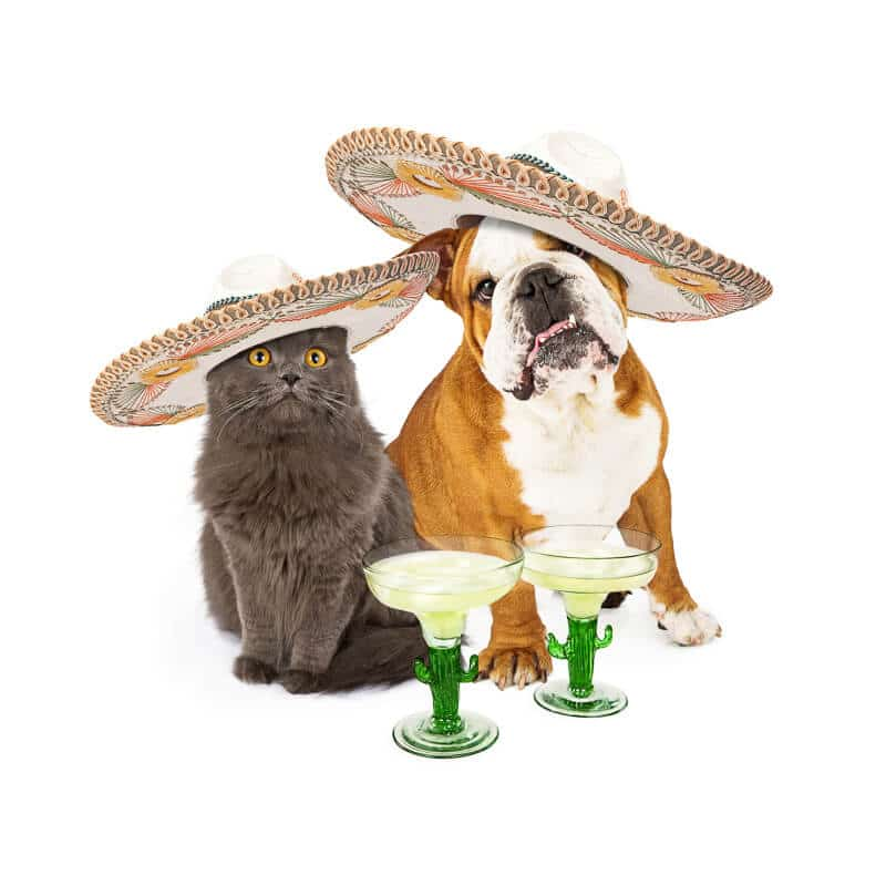 Cinco De Mayo Cat and Dog