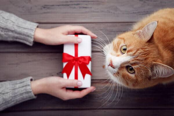 Female hand with gift box and ginger cat on grey background