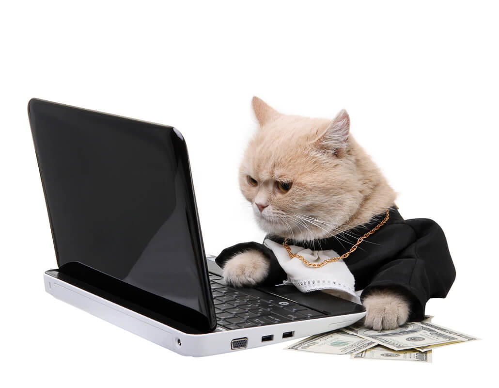 Red cat sitting on the notebook, dollar on the white background, Christmas, New Year