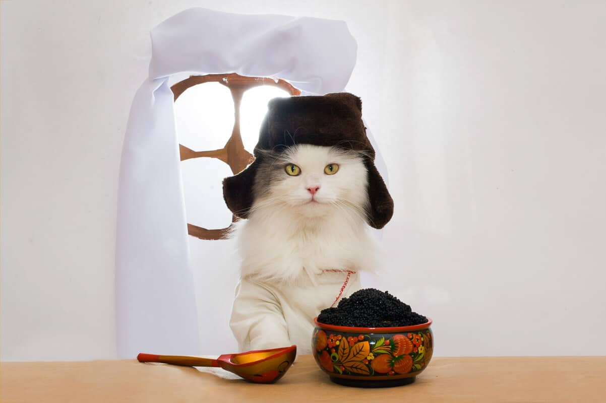 Russian cat eats caviar