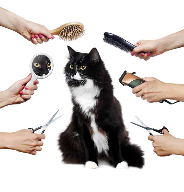 Long haired adult black and white cat while grooming procedure