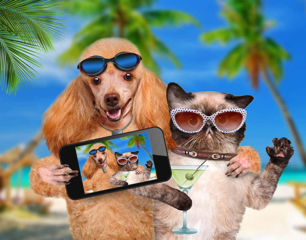 cat and dog wearing sunglasses with selfie