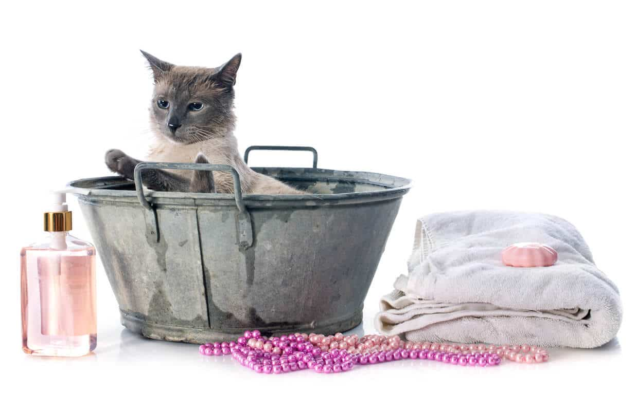 siamese cat in bucket with cleaning products - tools of how to groom a cat