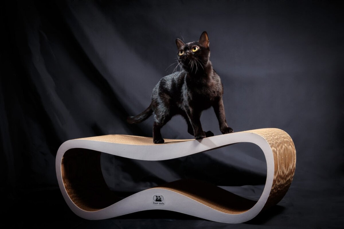 modern cat scratcher with black cat