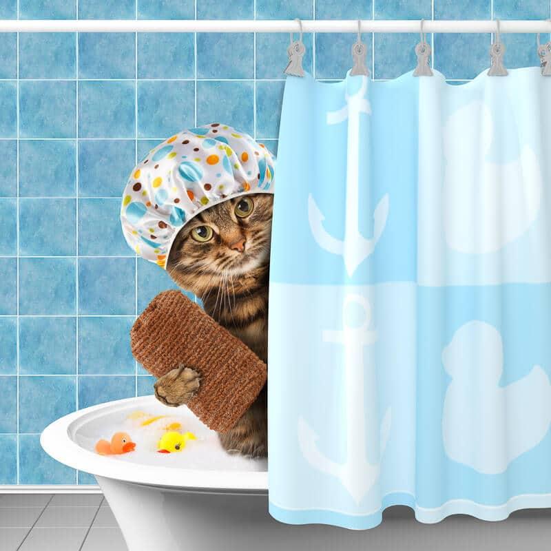 cat with scrub in bath tub