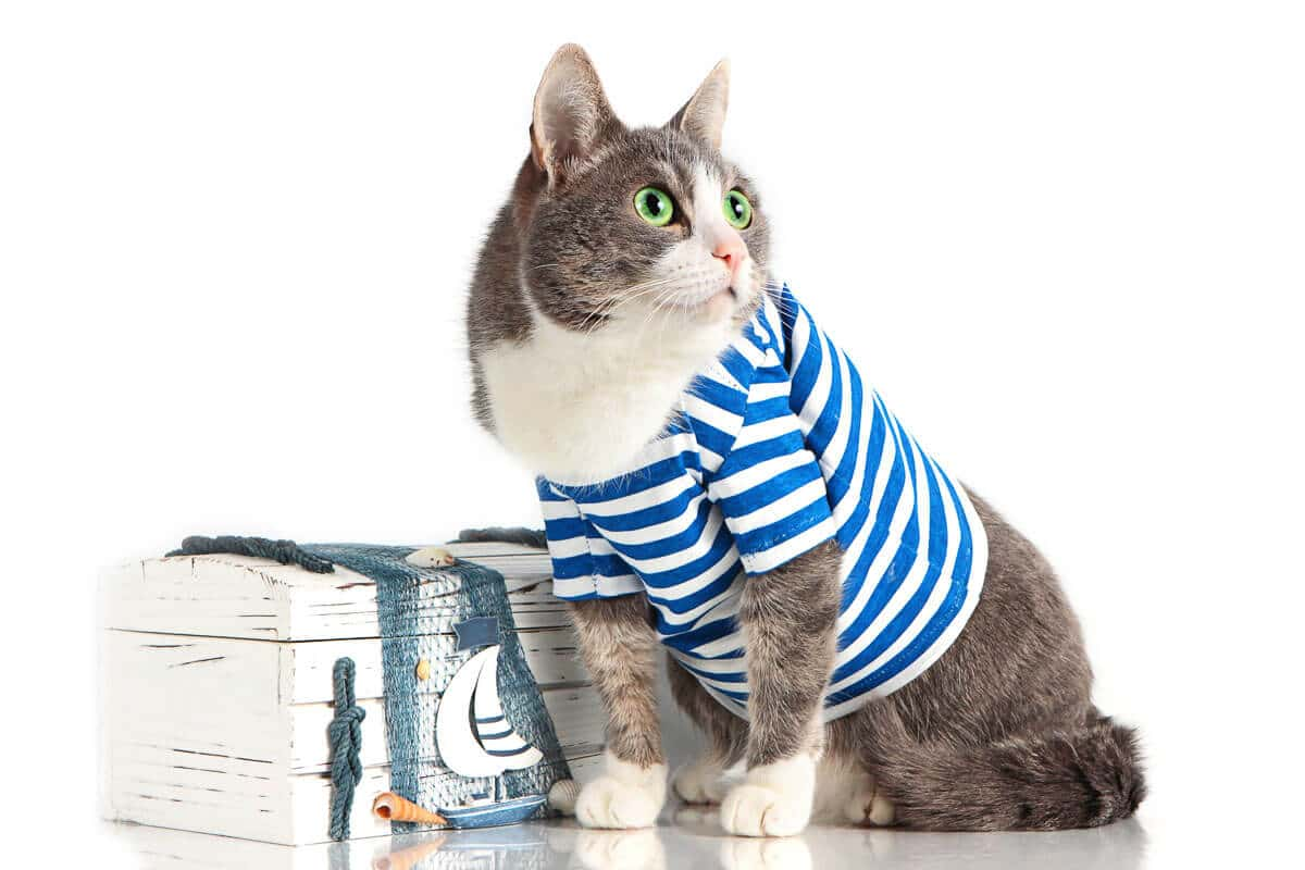 grey cat in seaman suit costumes for pet cats on isolated background