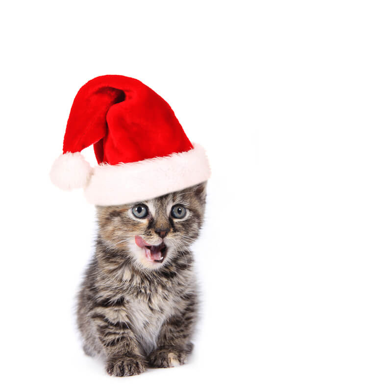 grey tabby cat in santa hat
