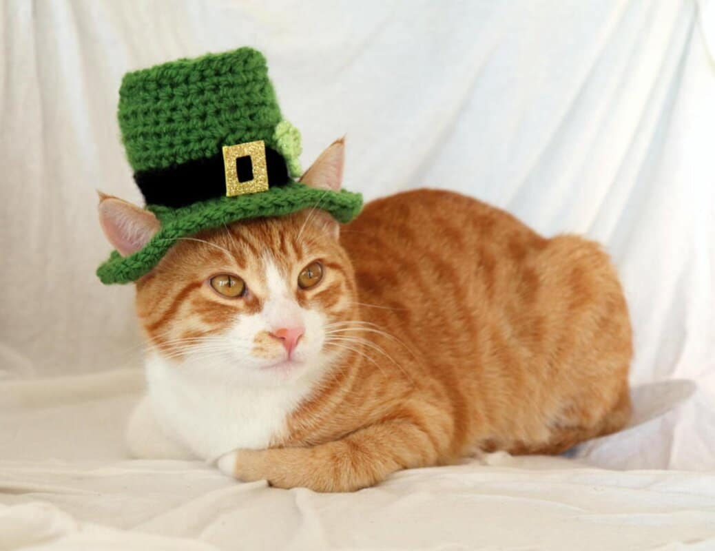 ginger cat in green irish hat