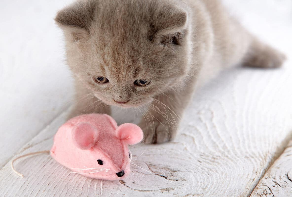 kitten and pink mouse one of the best toys for cats