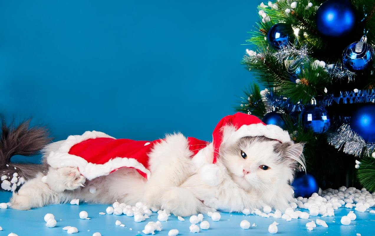 white cat in santa outfit next to christmas tree