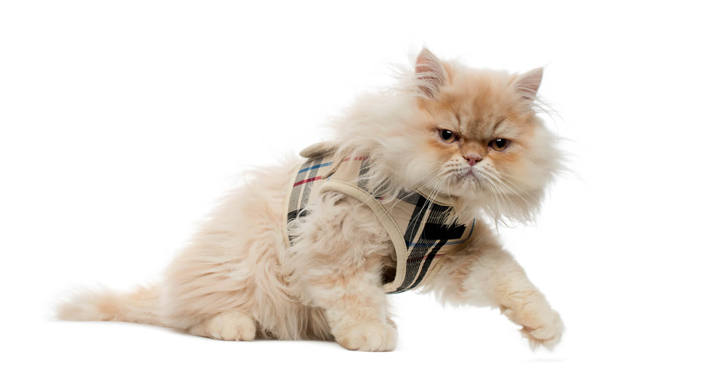 7 Best Escape Proof Cat Harness Options