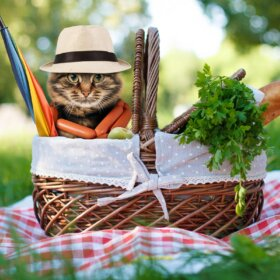 cat in picnic basket with food