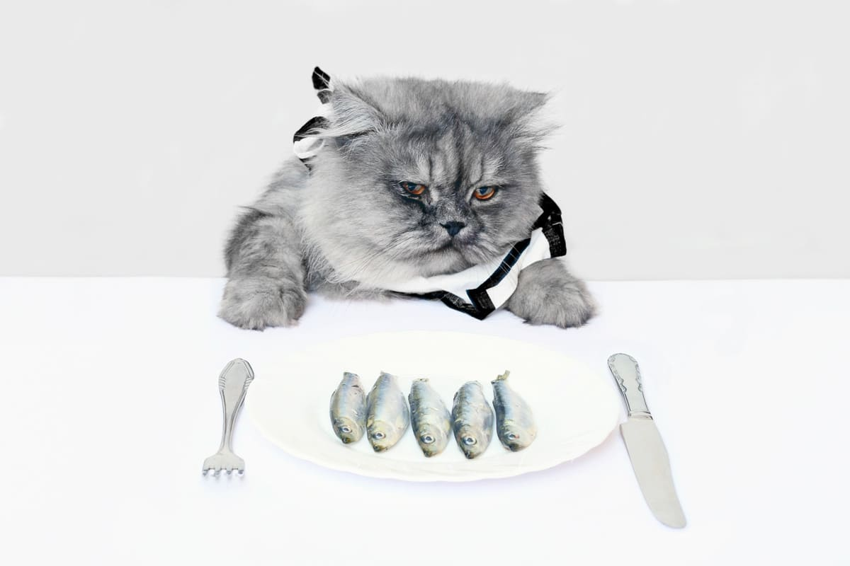 cat with multiple fish on plate