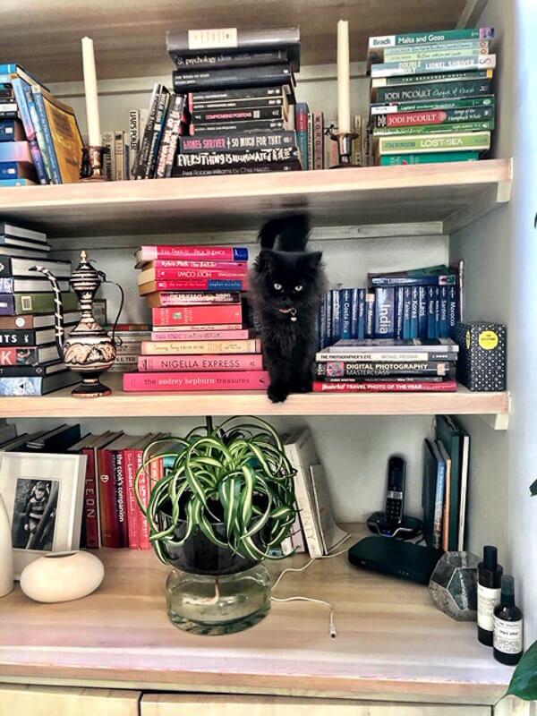 black cat in colourful book shelf 2