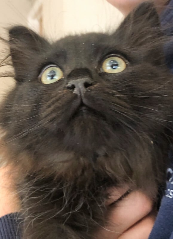 black cat looking up close up of face