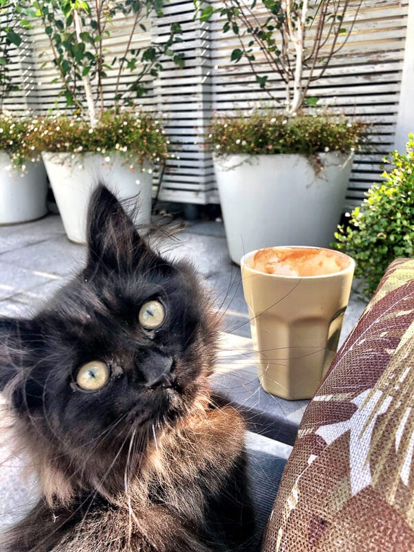 black cat on terrace with coffee
