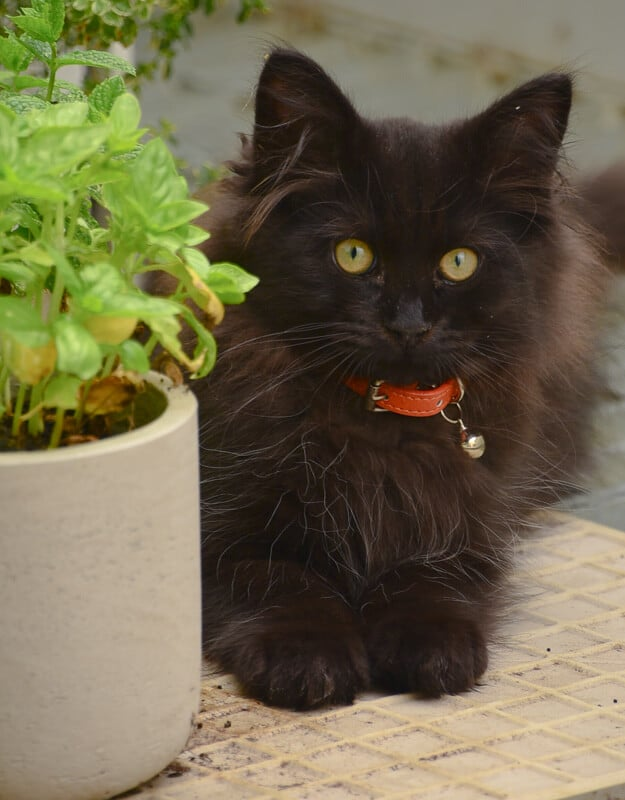 black kitten next to green pot plant
