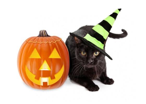 Halloween Black Cat Witch With Pumpkin
