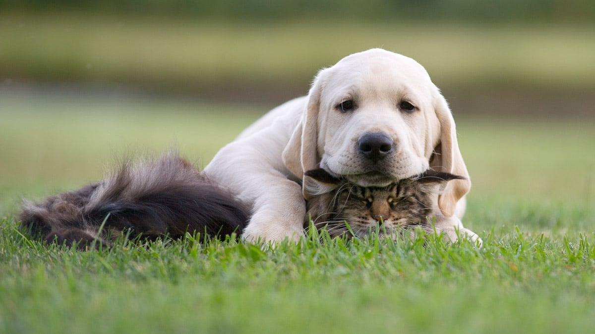 Dog with head on top of cat's head