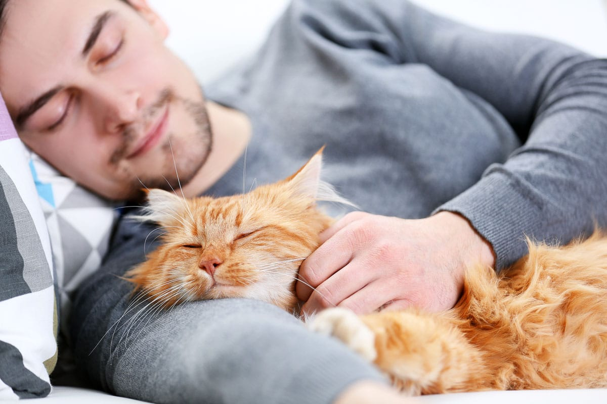 Sleeping young man with fluffy red cat