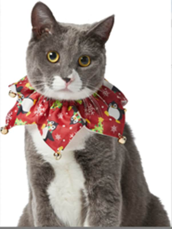 christmas cat ruffle collar