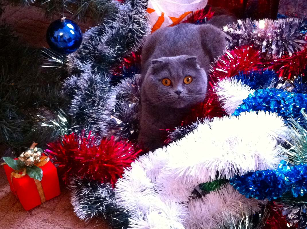 grey cat in multi coloured tinsel