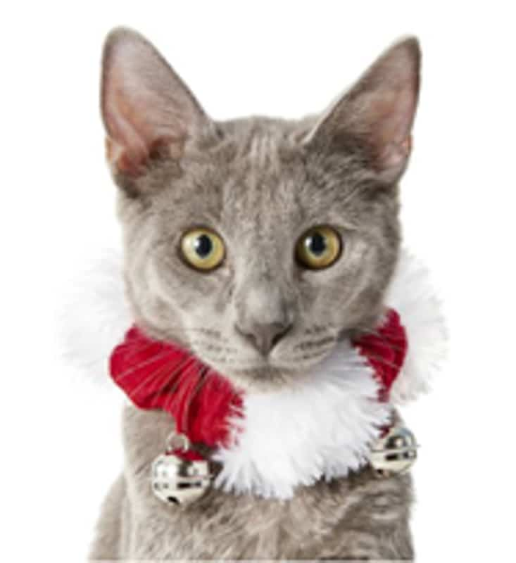 jingle bells collar