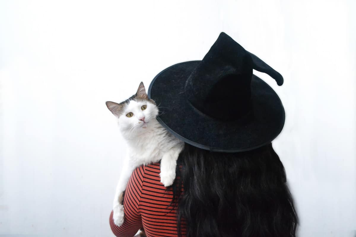 person in black hat seen from behind with a white cat