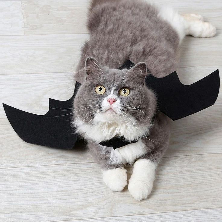 Grey and white cat wearing black bat wings