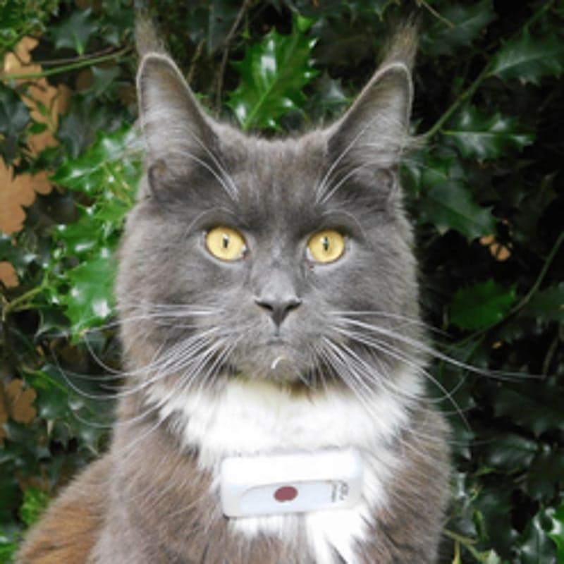 cat wearing weenect cat tracker