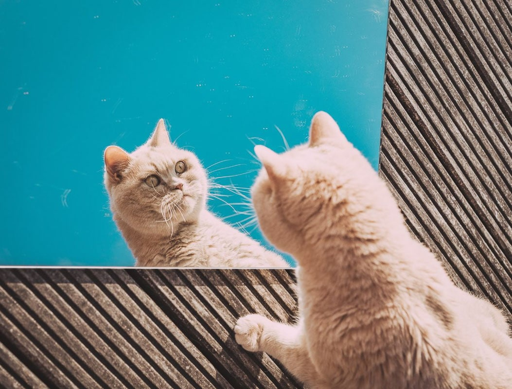 Ginger cat staring at self in mirror