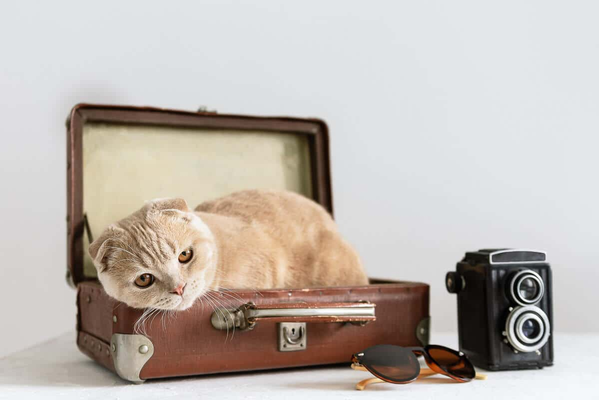 Bad vacation. Feeling unwell on vacation. Problems with hotel, bad tour operator. All rooms are reserved. Sad cat in suitcase with camera and sunglasses on white background. Copy space
