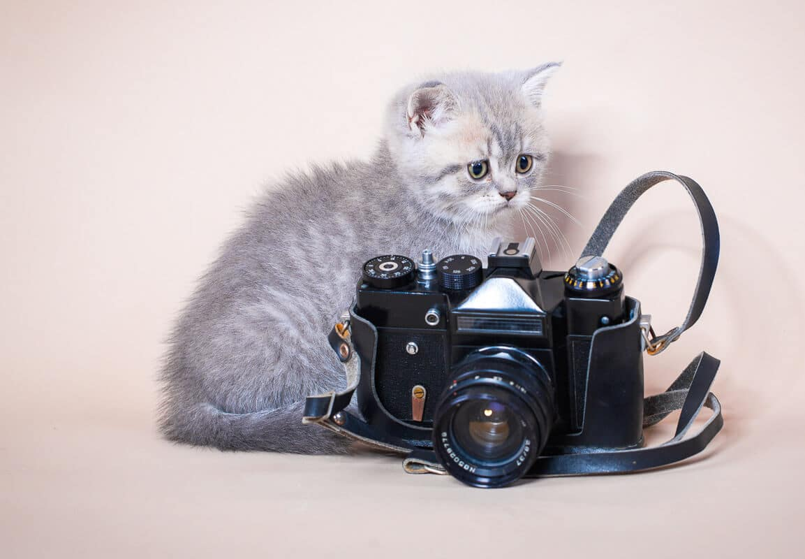 Cameras for Cat Collars - 4 Best Options to See Your Pet's Perspective
