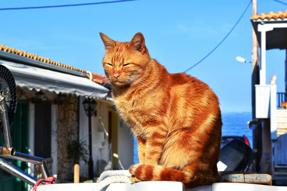 ginger cat with harbour buildings behind him